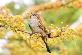 bird-2847799_640.jpg