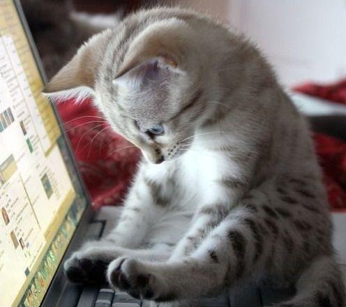 PCのつかいすぎで冷える。