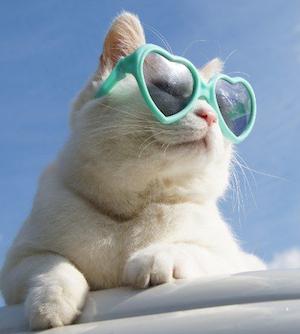 日焼け ねこ サングラス 美白