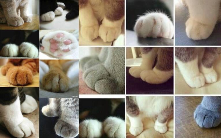 猫端会議ヘッダー写真.jpg
