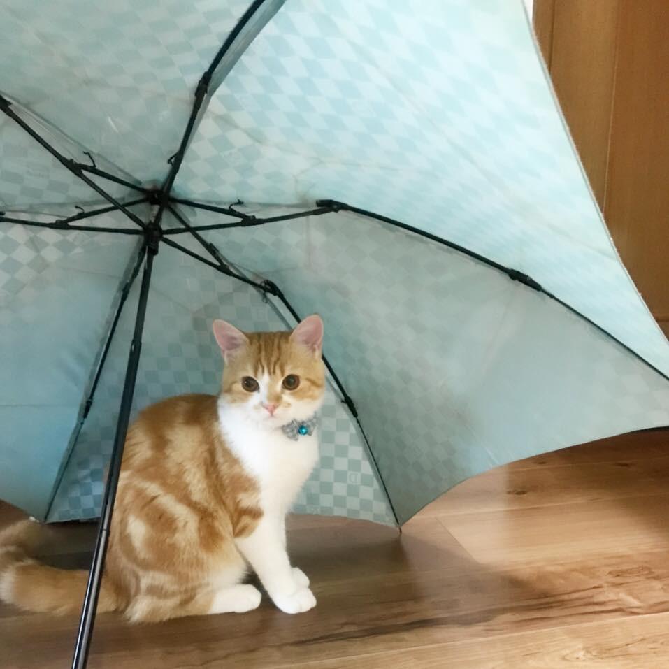 うにちゃん雨宿り.jpg