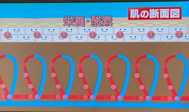 シナモン毛細血管4.jpg