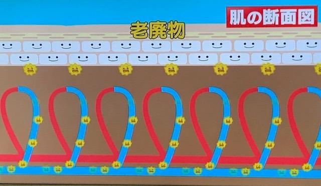 シナモン毛細血管5.jpg