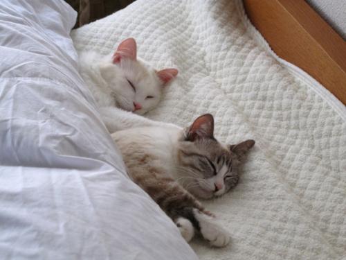 猫睡眠.jpg