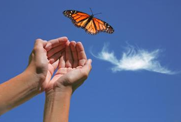手放す 蝶