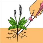 雑草を根からとる