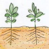 雑草の根っこ