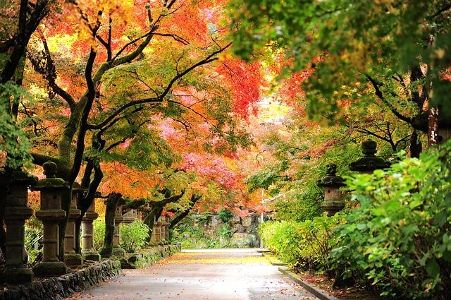 autumn-2791644_640.jpg