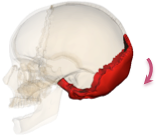後頭骨ポンプ
