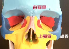目の周辺の骨.png