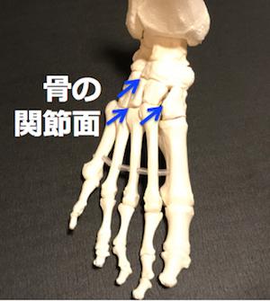 骨の関節.png