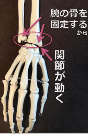 手骨の関節 のコピー.png