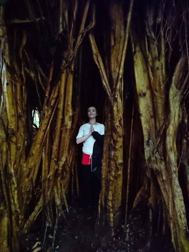 ガジュマルの樹Roe.jpg