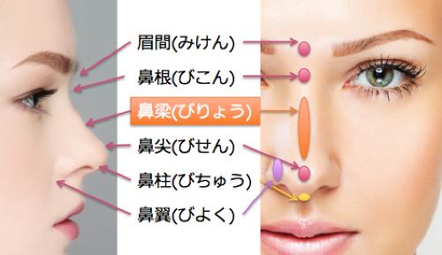 鼻の名称鼻梁.png