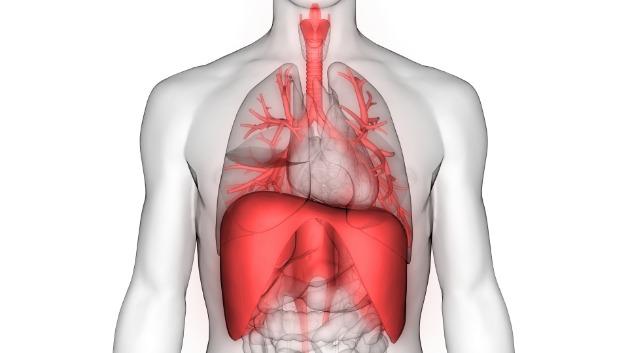 肺と横隔膜.jpg