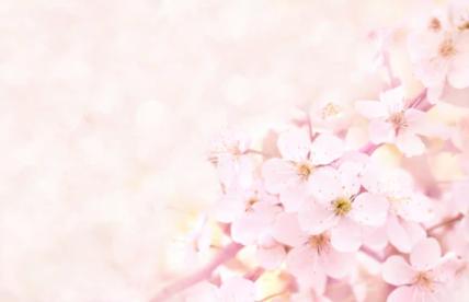 春さくら.png