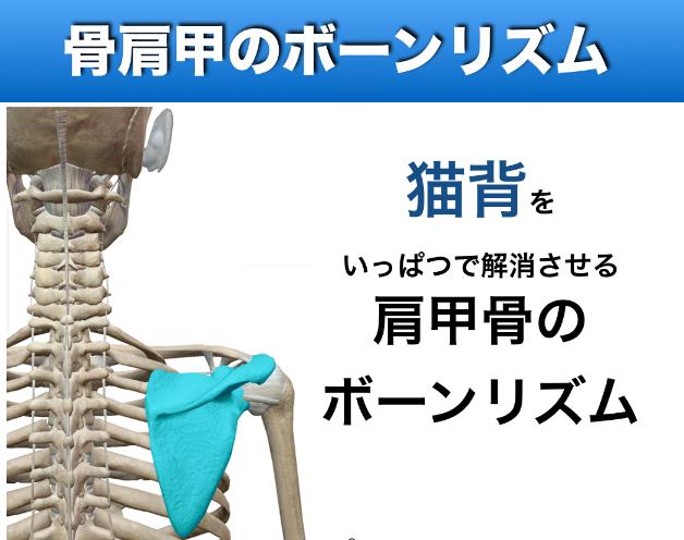 シンメトリーBody肩甲骨.png