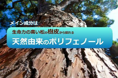 HPジェルLP松樹ポリフェノール.png