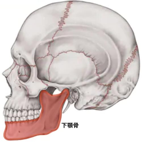 下顎骨.png