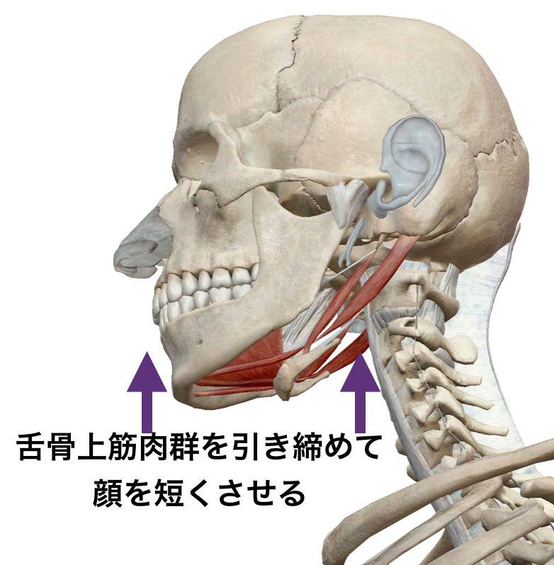 舌骨上筋から短くさせる.png
