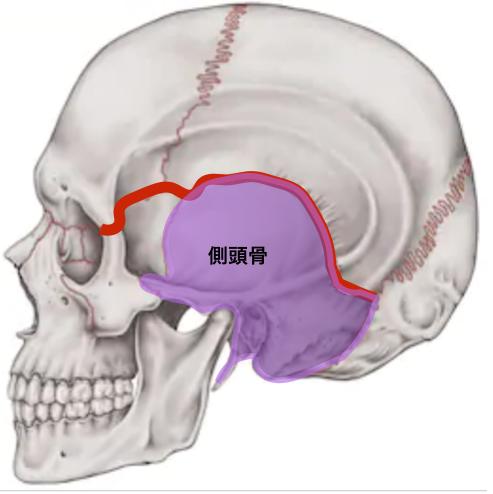 天蓋骨と側頭骨.png