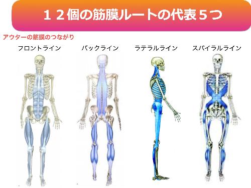筋膜ルート4種類.png
