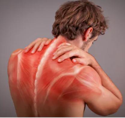背中の筋肉繊維.png