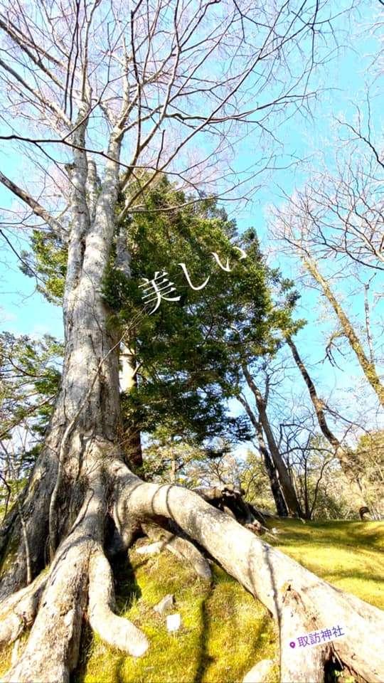 美し樹.jpeg