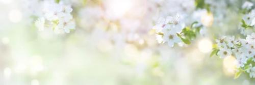 葉桜.png