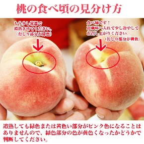 桃食べごろ.jpg