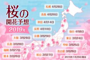 桜開花2019.jpg