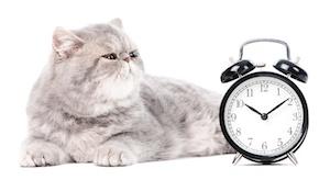 cat-clock.jpg