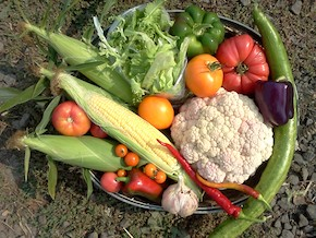 organic_CSA_farm_shareweek18.jpg