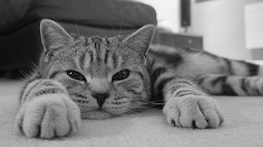 lazy-cat-209919.jpg