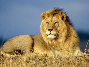 Lion-rest_1600x12001.jpg
