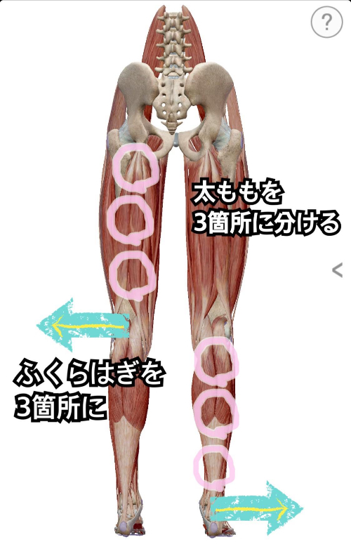 筋膜リリース下肢2.jpg