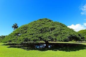 この木なんのき.jpg