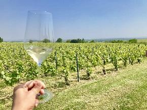 畑とグラス シャルトーニュタイエ Vineyard