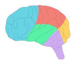 脳.jpg