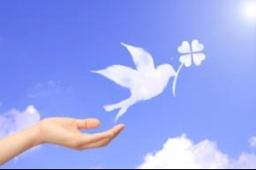 白い鳥.jpg