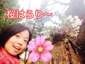 桜の木.jpg
