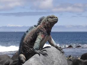Galapagos Canodros copyright 2012 ILTM (63).jpg