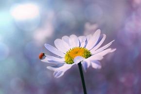 ladybug-1320563_640.jpg