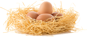 drive-the-eggs-3070850_640.png
