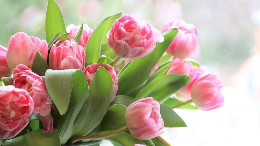 tulips-4026273__480.jpg