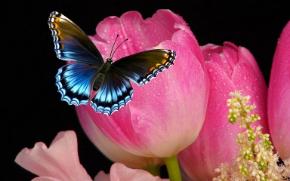 tulip-858781__480.jpg