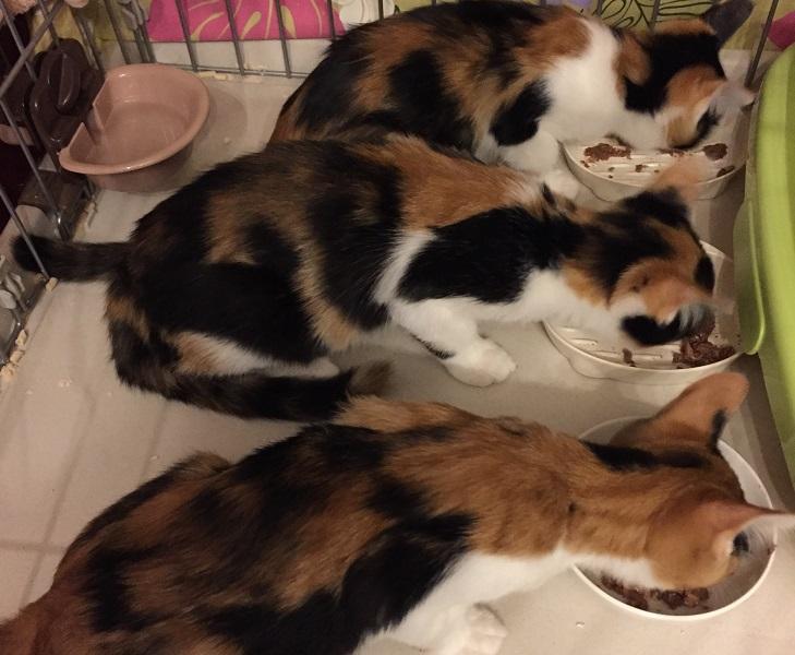 3匹猫ごはん