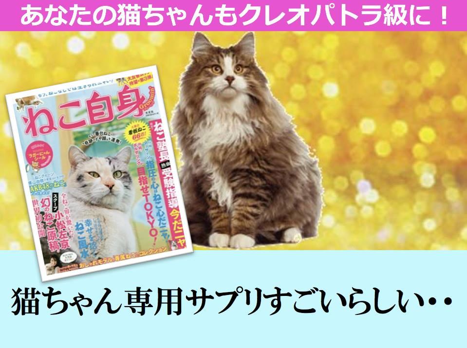 山本さんアレンジクレオパトラの猫