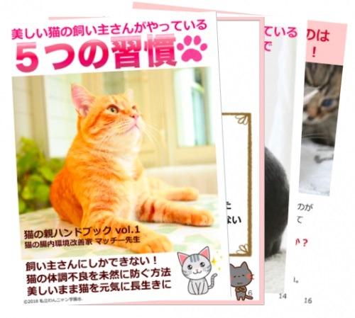 ちらみせ猫の親ハンドブック.jpg