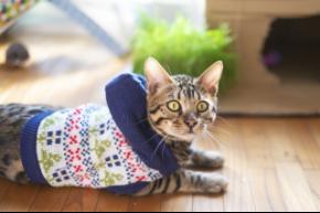 セーター猫.jpg